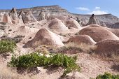 stock photo of goreme  - Wine growing in the mountains of Goreme Turkey - JPG