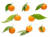 Set Of Ripe tangerines With Green Leaf Taken Closeup.isolated.