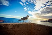 Seagull on the pier, Monaco, France