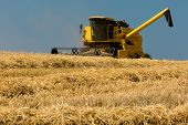 stock photo of harvest  - Yellow harvester harvesting the ripe crop on a sunny summer day - JPG
