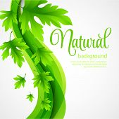 Natural vector background with green spring leaves