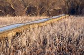 picture of marshes  - Boardwalk crossing reeds and marsh of minnesota valley national wildlife refuge in bloomington - JPG