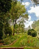 Grassy Path In A Garden