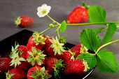 pic of strawberry plant  - strawberry with strawberry plant over black background - JPG
