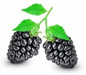 picture of blackberries  - blackberry with a leaf isolated on white - JPG