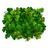 Saint Patricks Day Vector Background, Realistic Shamrock Leaves