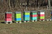 picture of bee-hive  - Bee hive on the field. Bee hive boxes.