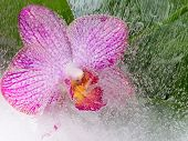 Delicate Purple Orchid