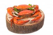 foto of cooked crab  - Cooked whole dungeness crab  - JPG