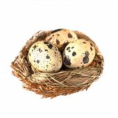 bird nest with eggs isolated on white