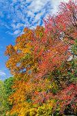 Autumn Assortment