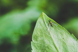 pic of lightning bugs  - beautiful green little insect landing on green leaf - JPG
