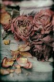 picture of nostalgic  - Image of dried vintage nostalgic roses background texture - JPG