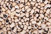 pic of phaseolus  - Haricot beans background close up macro image - JPG