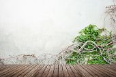 stock photo of ivy vine  - Vine growing on concrete wall and wood floor texture for background - JPG