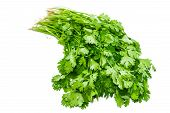 picture of bundle  - Bundle of fresh green coriander leaves with roots on a light background - JPG