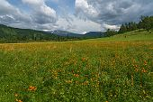 image of cloud forest  - Beautiful mountain landscape with orange flowers in the meadow on a background of mountains forest and blue sky with clouds - JPG