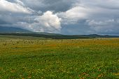 stock photo of cloud forest  - Beautiful mountain landscape with wildflowers in the meadow on a background of mountains forest and sky with clouds on a cloudy day - JPG
