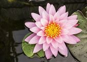 picture of ponds  - Lotus and lotus ponds - JPG