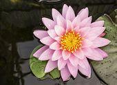 foto of ponds  - Lotus and lotus ponds - JPG