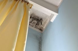 stock photo of spores  - Mold in the corner of the white ceiling and blue wall with yellow curtain on the left side - JPG