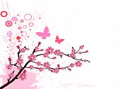 image of cherry blossom  - vector illustration of a branch with cherry blossom - JPG