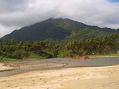 Tropical jungle panorama