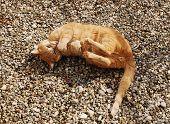 Ginger Tom Versus Twig