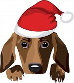 Dog in Santa Claus hat. Vector illustration.