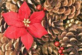 Pinecones And Poinsettias