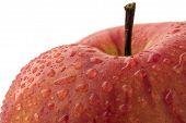 frische apple