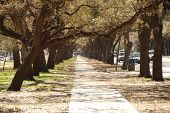 Tree lined sidewalk