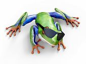 Realistic 3d Rendering Of A Green, Blue And Orange Colored Red-eyed Tree Frog, Agalychnis Callidryas poster