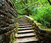 viejas escaleras en bosque