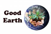 Planet Earth with a human hands holding a Real Marijuana Plant in dirt. Represents Nature and Earth  poster