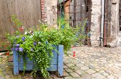 Pot Of Wild Flowers