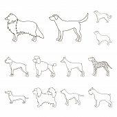 Dog Breeds Outline Icons In Set Collection For Design.dog Pet Vector Symbol Stock  Illustration. poster