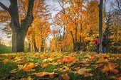 Amazing Autumn. Autumn Leaves In Colorful Park. Fall Landscape. Yellow And Red Trees In Alley. Two M poster
