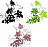 stock photo of grape-vine  - Grapes - JPG