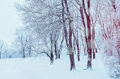 Winter Landscape With Falling Snow - Wonderland Forest With Snowfall And Sunlight Over Winter Grove. poster