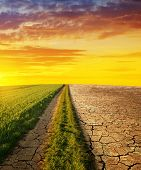 Dry country with cracked soil and meadow with grass at sunset. Concept of change climate or global w poster