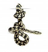 Jungle Carpet Python, Morelia spilota cheynei, black and yellow, against white background