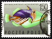 Postage stamp Poland 1967 Striped Triggerfish, Tropical Fish