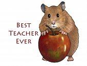 Hamster With Apple: Best Teacher Ever