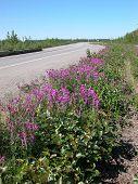 Estrada para Fairbanks