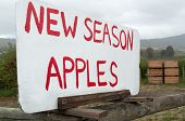 Sign For Roadside Apple Sales