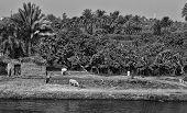 Nile life