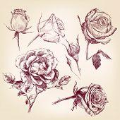 hand drawn roses set