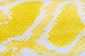 stock photo of pythons  - Part Of The Yellow Python Skin Background - JPG