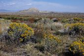 Crowheart Butte Sage
